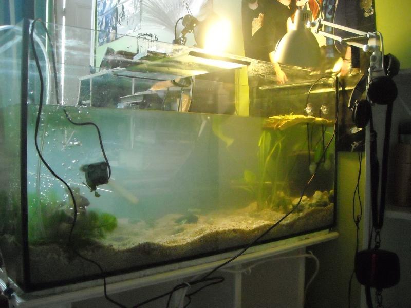 Mon aqua et ma Graptemys Dscn0121
