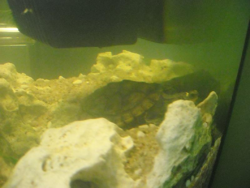 Mon aqua et ma Graptemys Dscn0124