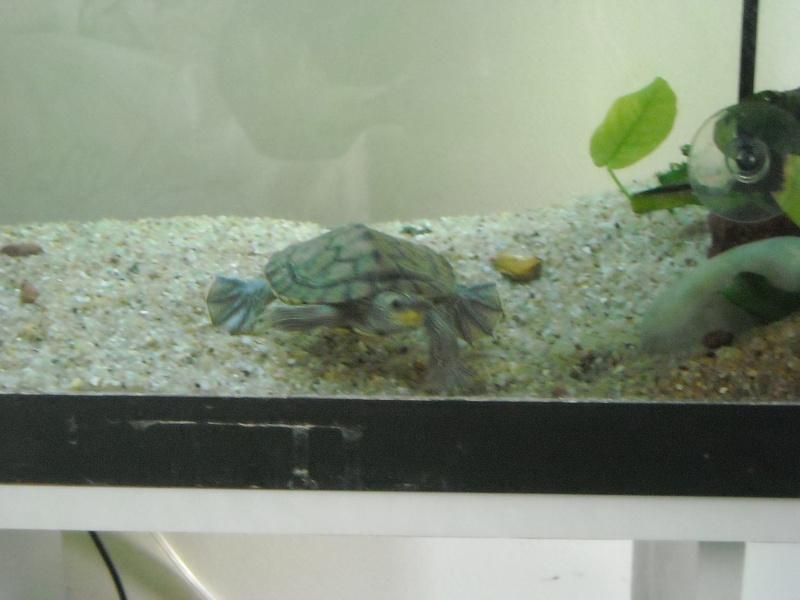 Mon aqua et ma Graptemys Dscn0513