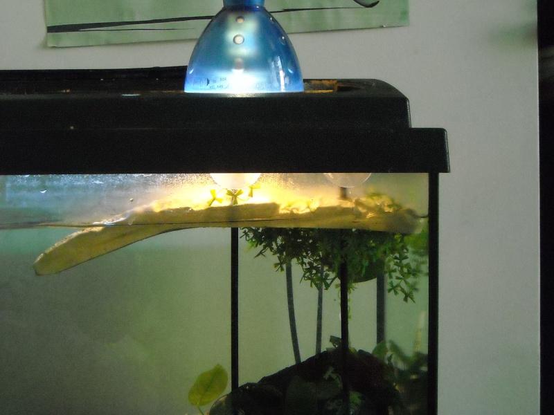 Mon aqua et ma Graptemys Dscn0514