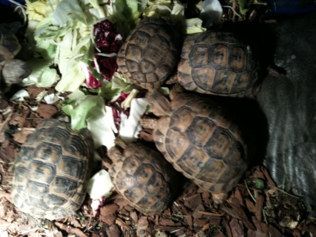 information sur mes tortues merci Photo_21