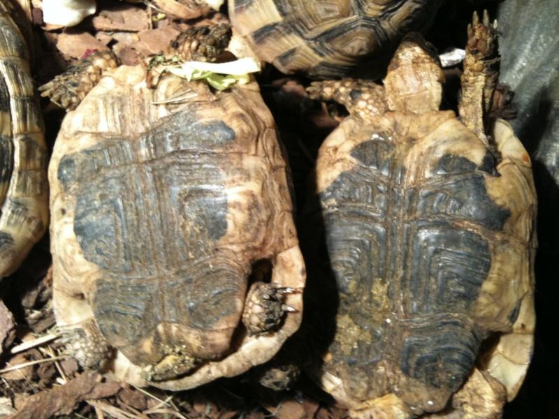 information sur mes tortues merci Photo_22