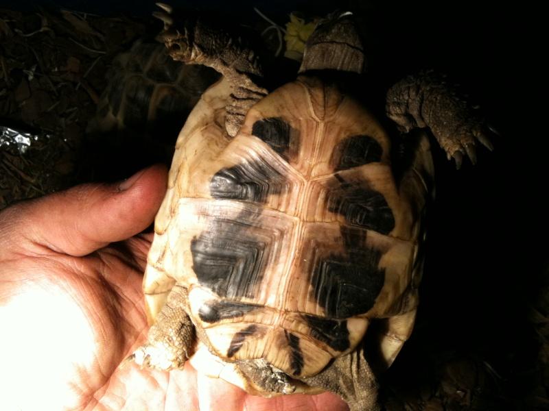 information sur mes tortues merci Photo_24