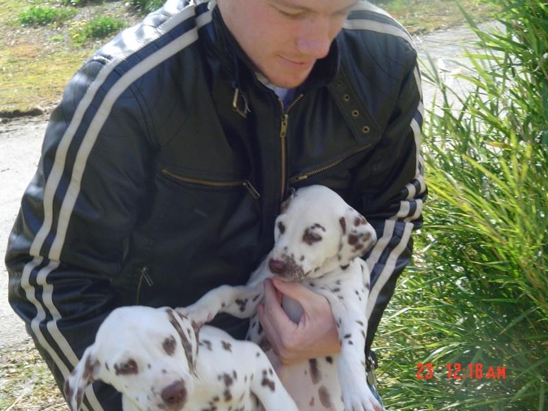 Mon Dalmatien Demeter Demete10