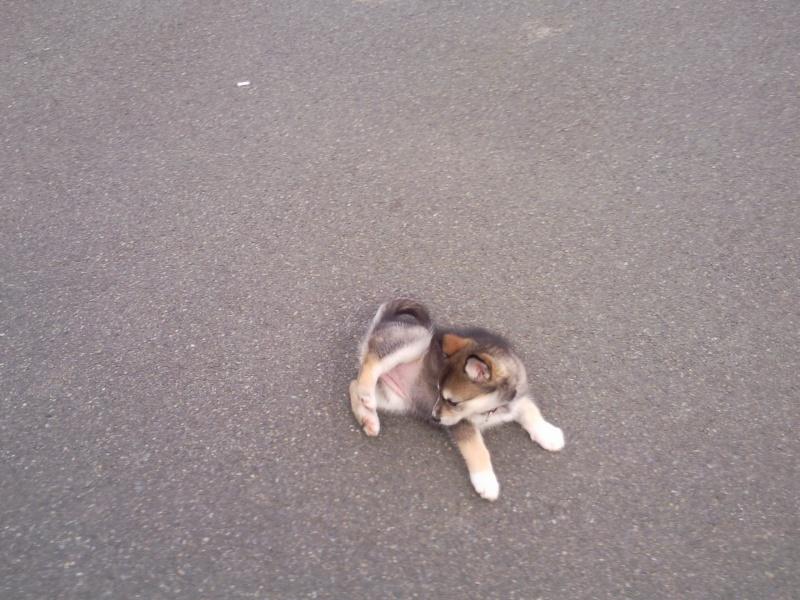 Mon Husky Eyra Photo019