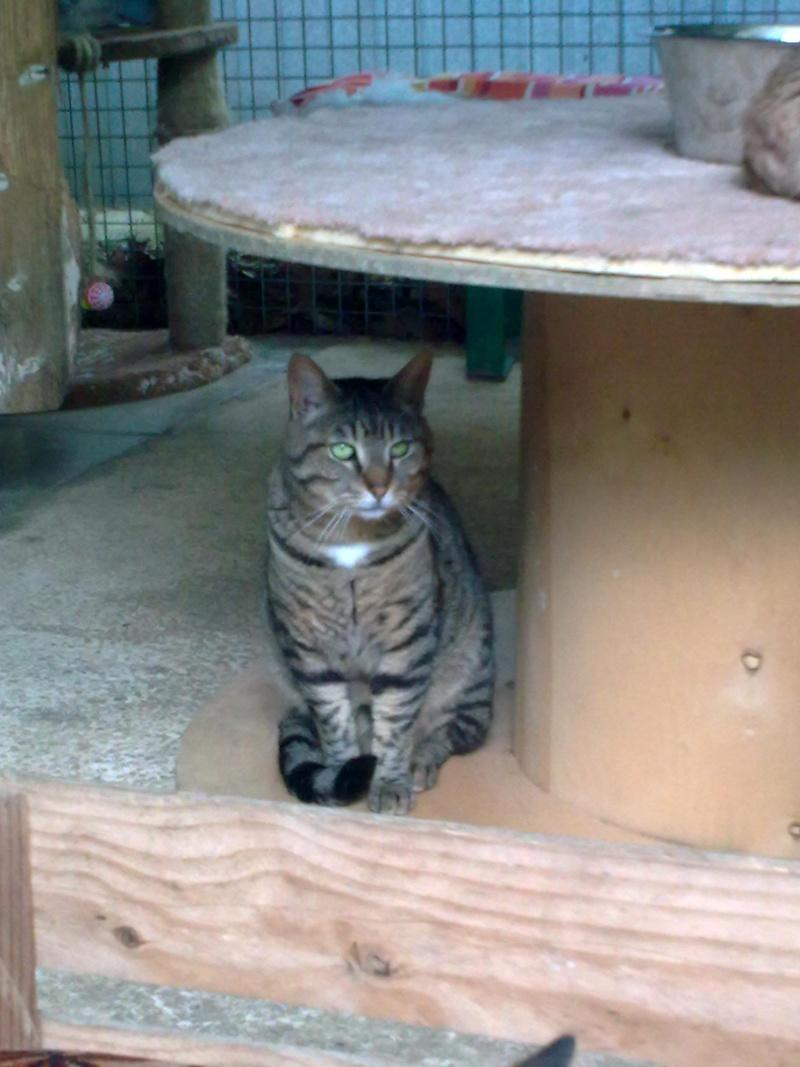 CIMBA - TIGRE - 2007 - (35) 15052013