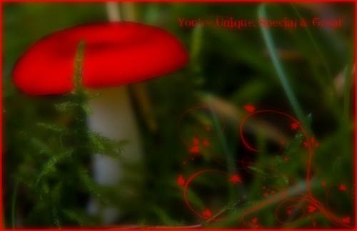 Les petits cadeaux d'Alice Cadeau10