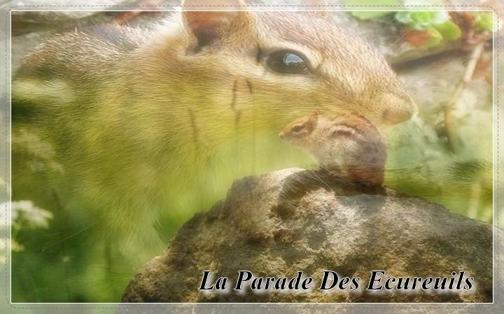 La Parade Des Ecureuils
