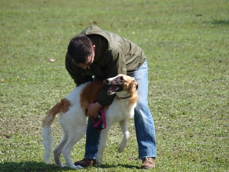 Elfie ... un vrai chien de course P4111113