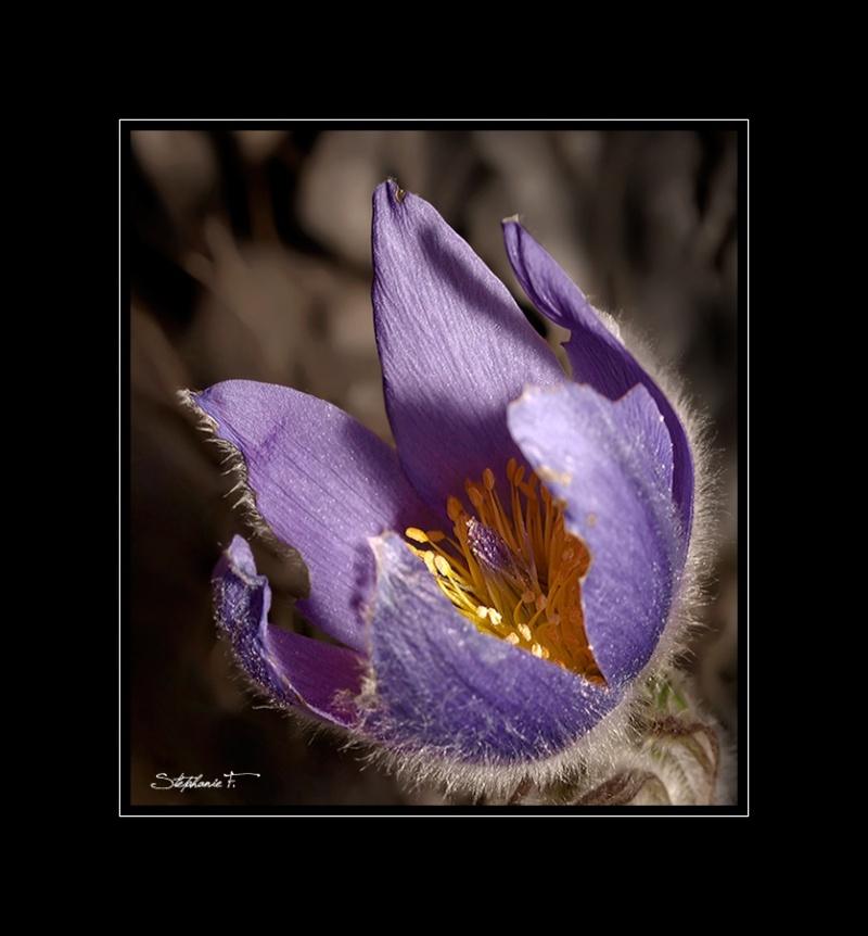 Vos plus belles photos du mois d'avril 2010 Anamon25
