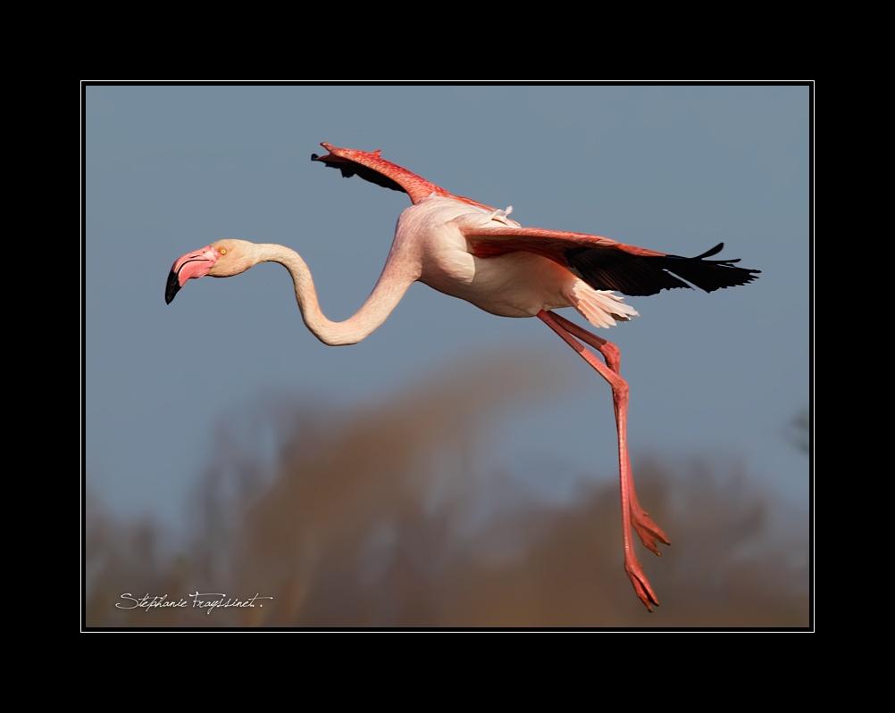 Vos plus belles photos du mois d'avril 2010 Flaman18