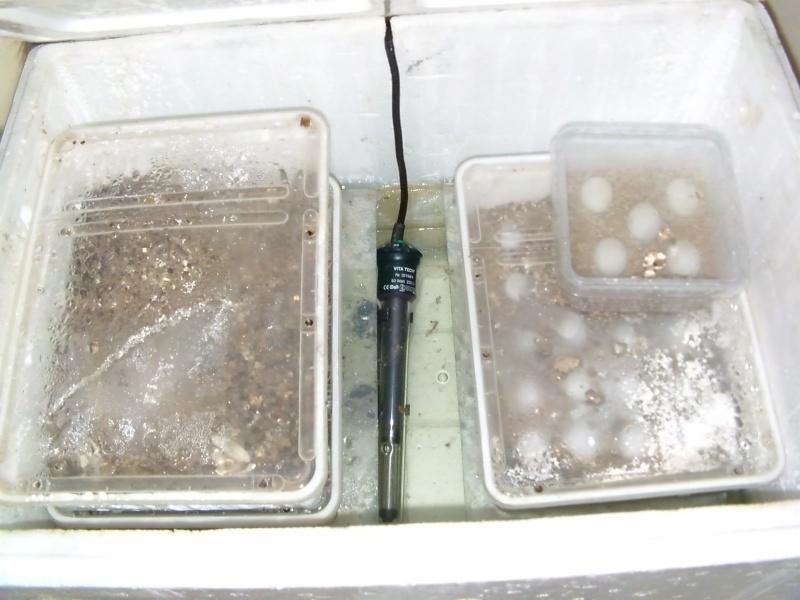 Quel incubateur choisir? Dvci0028