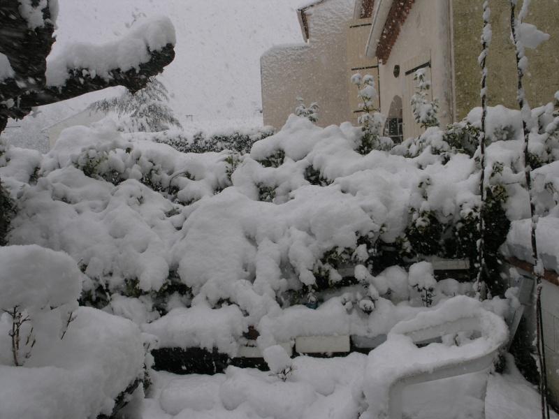 la neige sur mes arbres P1012110