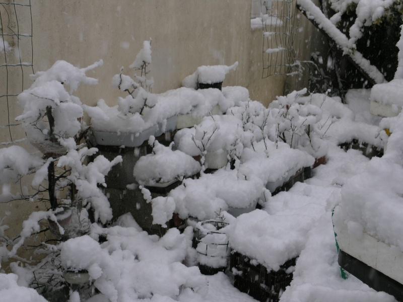 la neige sur mes arbres P1012111