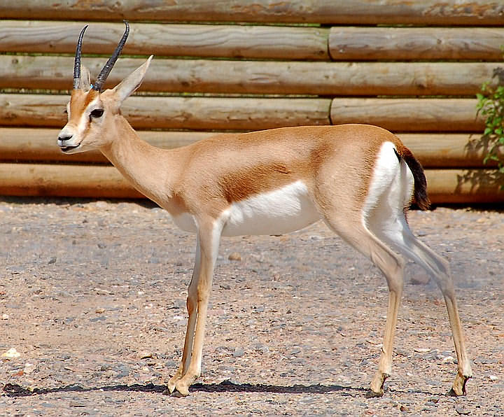journée internationale sur la biodiverstié Gazell10