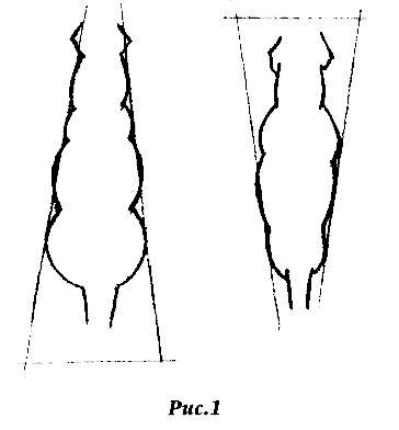 Стандарт породы Ris114