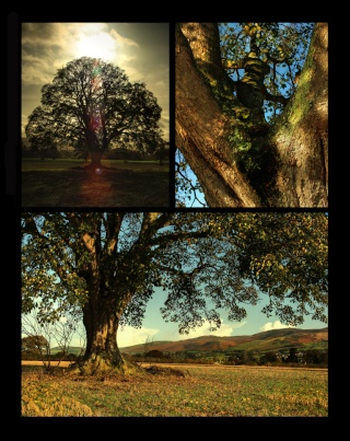 Competition 3 (Tree Triptych) 2009/10 – Results A674_310