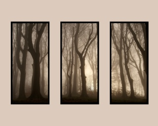 Competition 3 (Tree Triptych) 2009/10 – Results B420_110