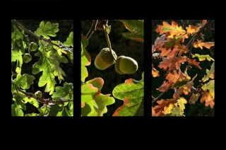 Competition 3 (Tree Triptych) 2009/10 – Results Parts_10