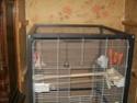 des perruche dans un appartement  qui ? 100_2412