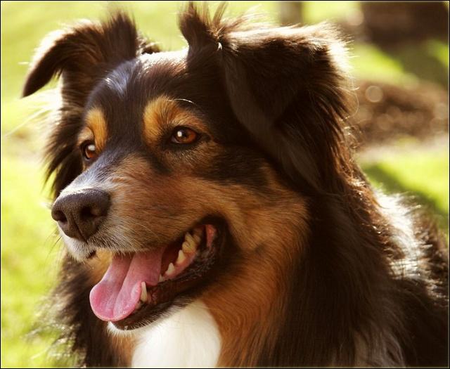 Entrainements & Sorties des chiens, chiens ~ Calami10