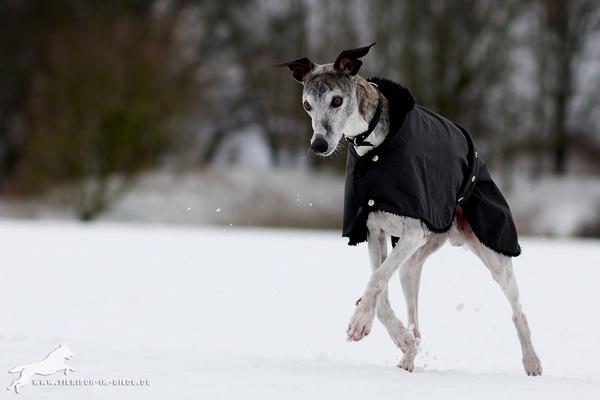 Entrainements & Sorties des chiens, chiens ~ End10