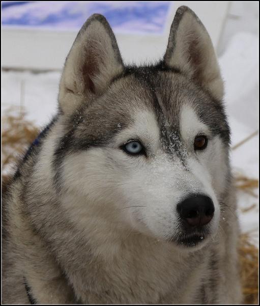 Entrainements & Sorties des chiens, chiens ~ Foulk11