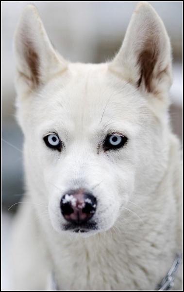 Entrainements & Sorties des chiens, chiens ~ Iris10