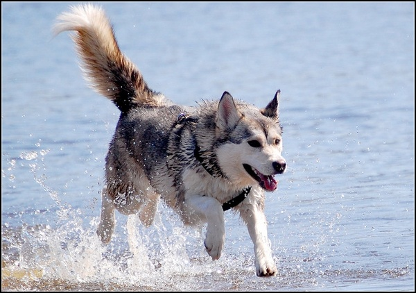 Entrainements & Sorties des chiens, chiens ~ Jenna10
