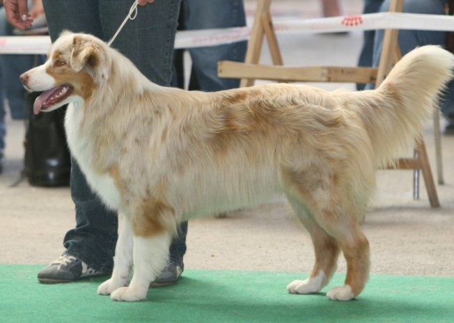 Entrainements & Sorties des chiens, chiens ~ Meiko10