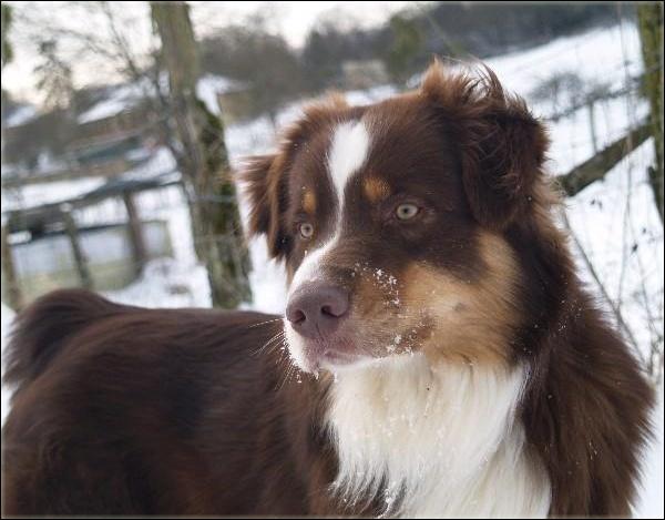 Entrainements & Sorties des chiens, chiens ~ Prince10
