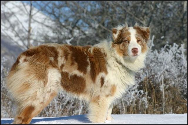 Entrainements & Sorties des chiens, chiens ~ Yumi10
