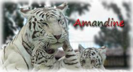Mon blog Sansti10