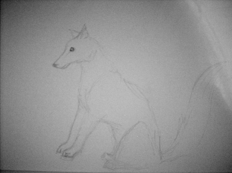 Wolf  1 Dscn0721