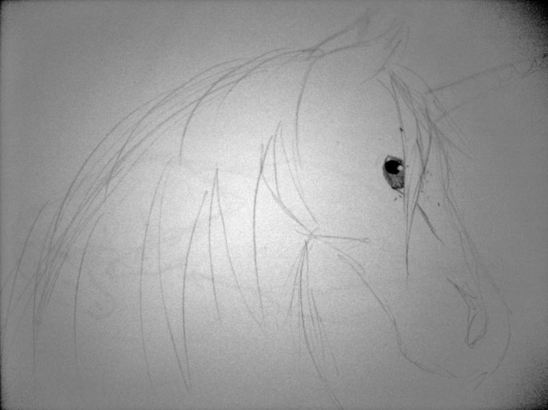 Unicorn Face Dscn0722