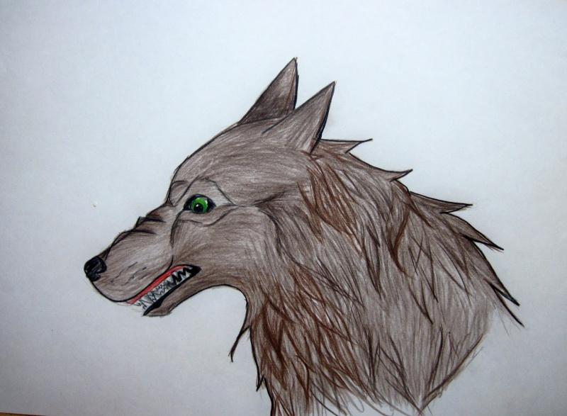 Wolf Growling Img_0310
