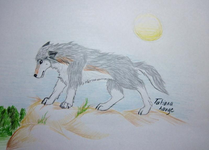 Wolfie + Simple BG Img_0415