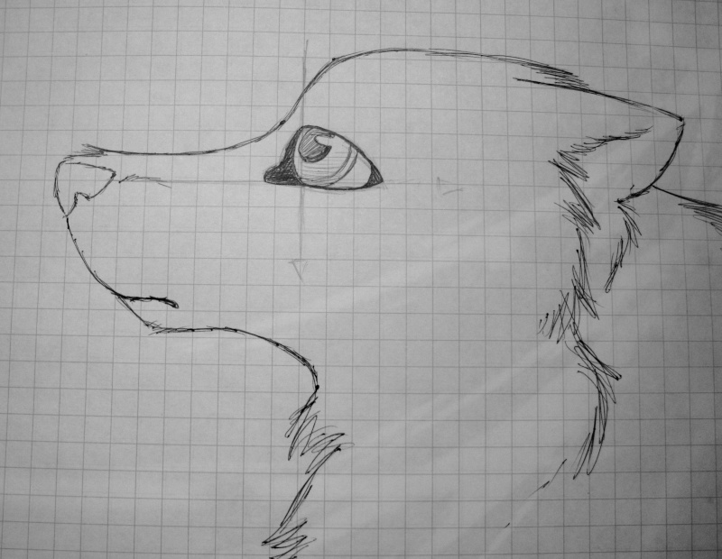 Traditional Canine Eye Tutorial Img_1118
