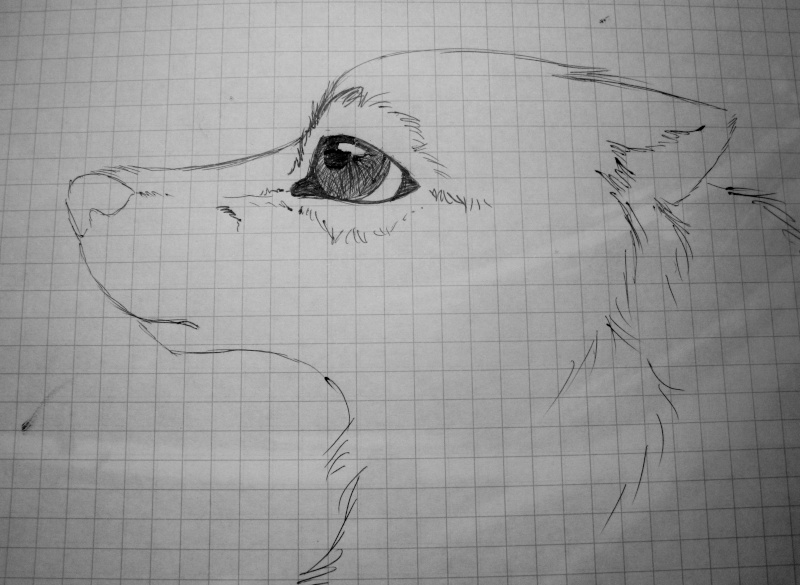 Traditional Canine Eye Tutorial Img_1119