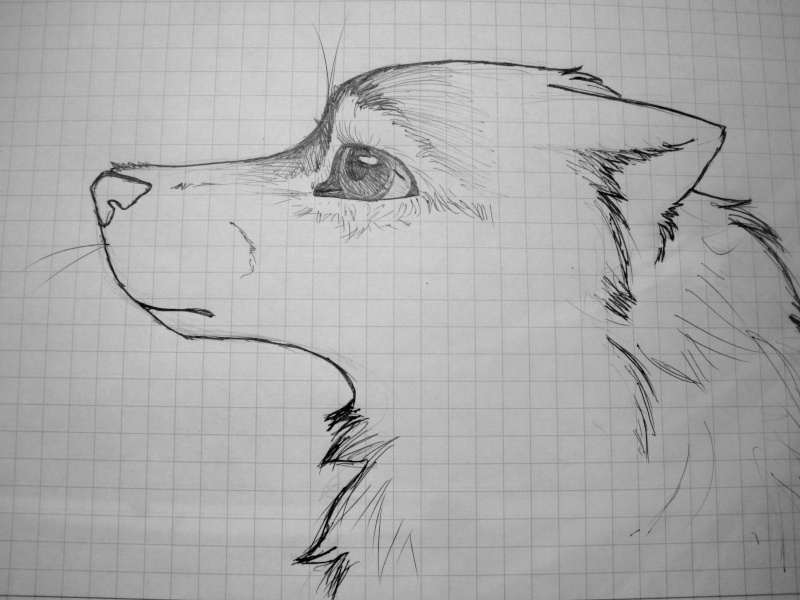 Traditional Canine Eye Tutorial Img_1120
