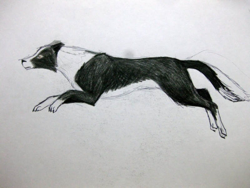 Dog Sketches Img_1510