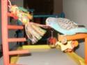 JEUX et LIEUX FAVORIS de nos oiseaux P9160210