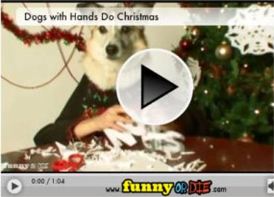 FUNNY CHRISTMAS VIDEO - How dogs with hands prepair for Xmas! Dogs-w10