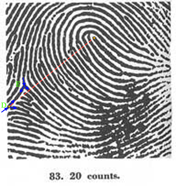 X - WALT DISNEY - One of his fingerprints shows an unusual characteristic! - Page 23 Patti-15
