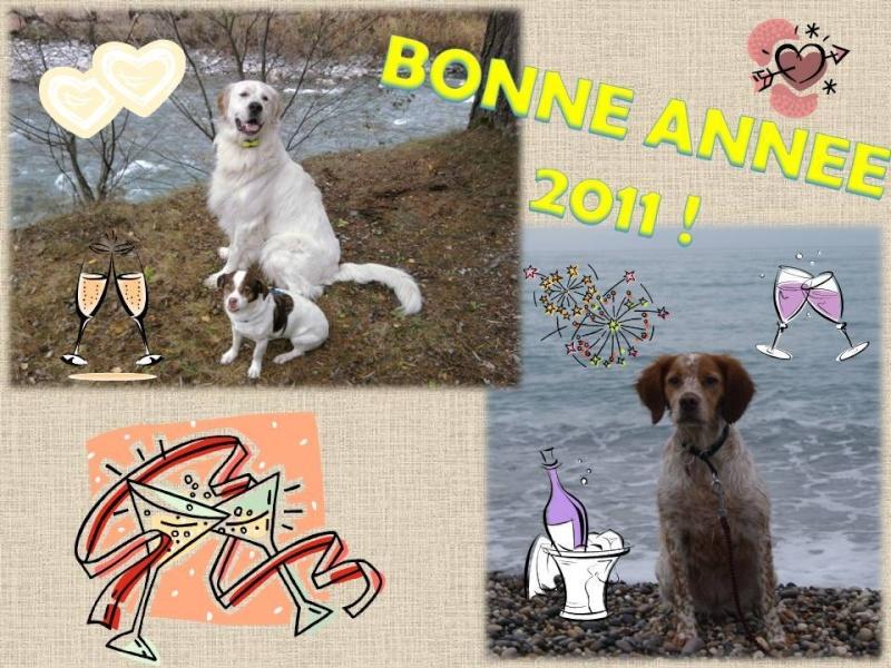 erko chien visteur region paca Bonne-10