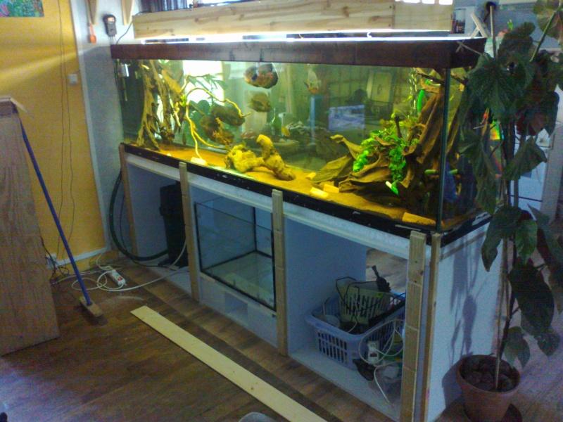kej aquariumsssssssss!! 01042010