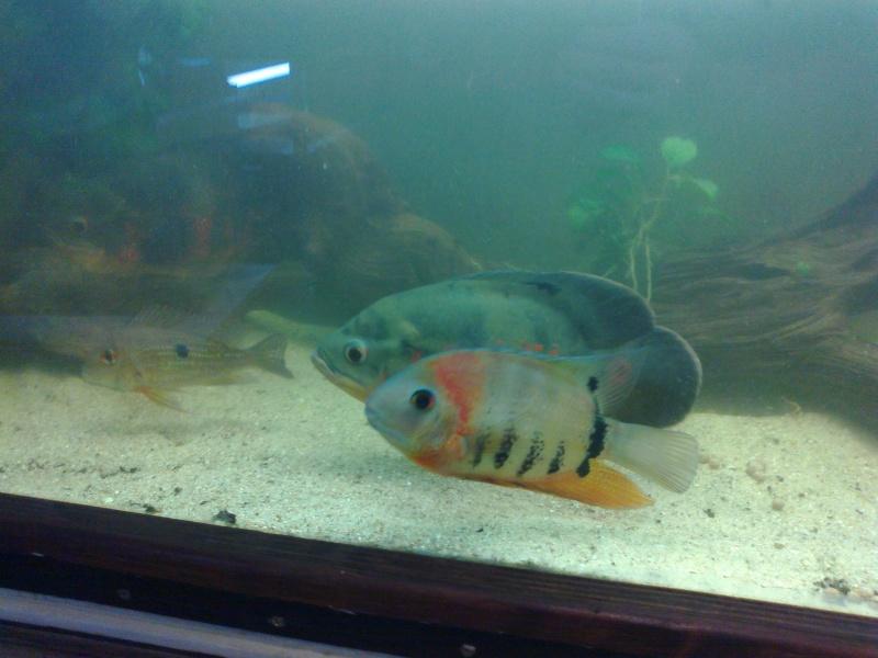 kej aquariumsssssssss!! 18122010