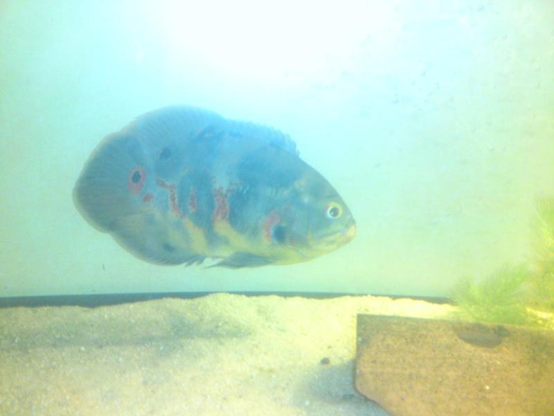 ma fishroom P30-1011