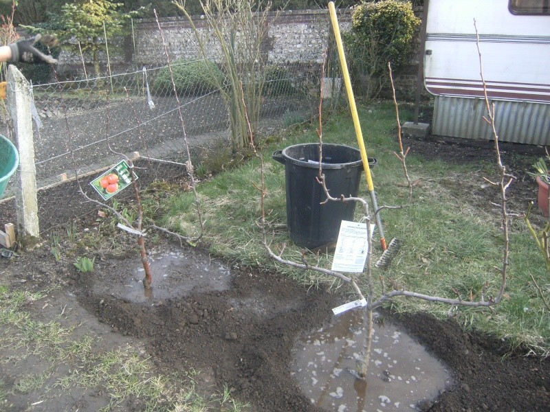 votre jardin en Mars et avril ? Dscf5211