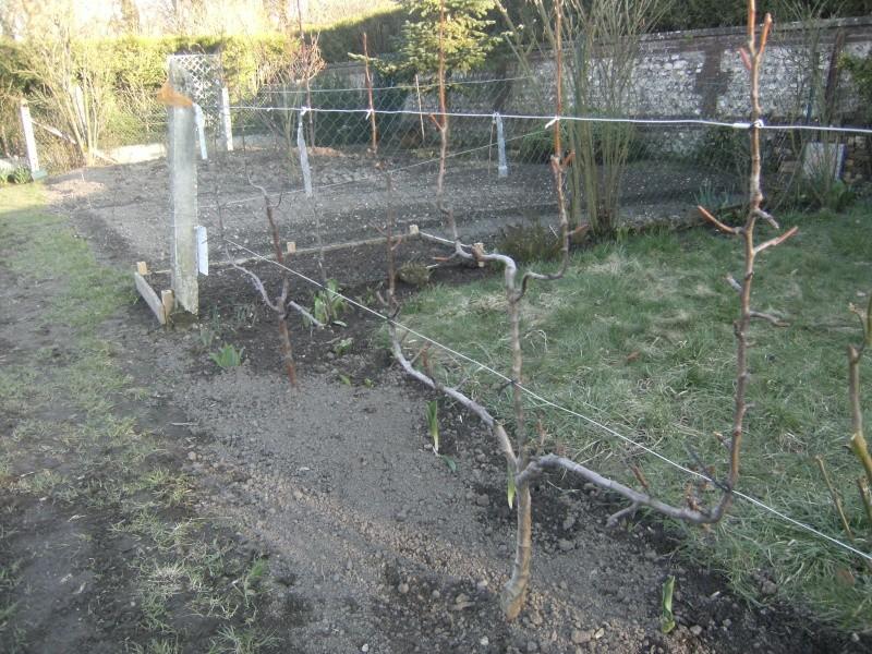 votre jardin en Mars et avril ? Dscf5312